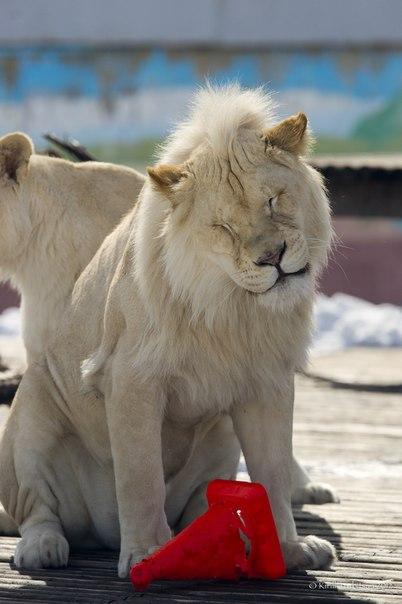 зоопарка состоится День