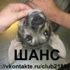 """Группа помощи животным """"ШАНС"""" Великий Новгород"""