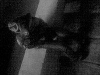 Димка Tresh, 19 ноября 1991, Мурманск, id60390251