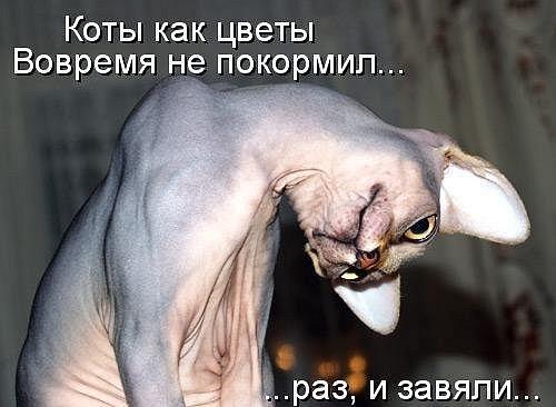 http://cs9960.vkontakte.ru/u4562340/103920041/x_05c33f1a.jpg
