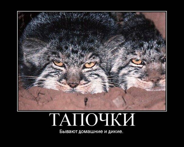 http://cs9960.vkontakte.ru/u87482394/116090438/x_f9817cd7.jpg