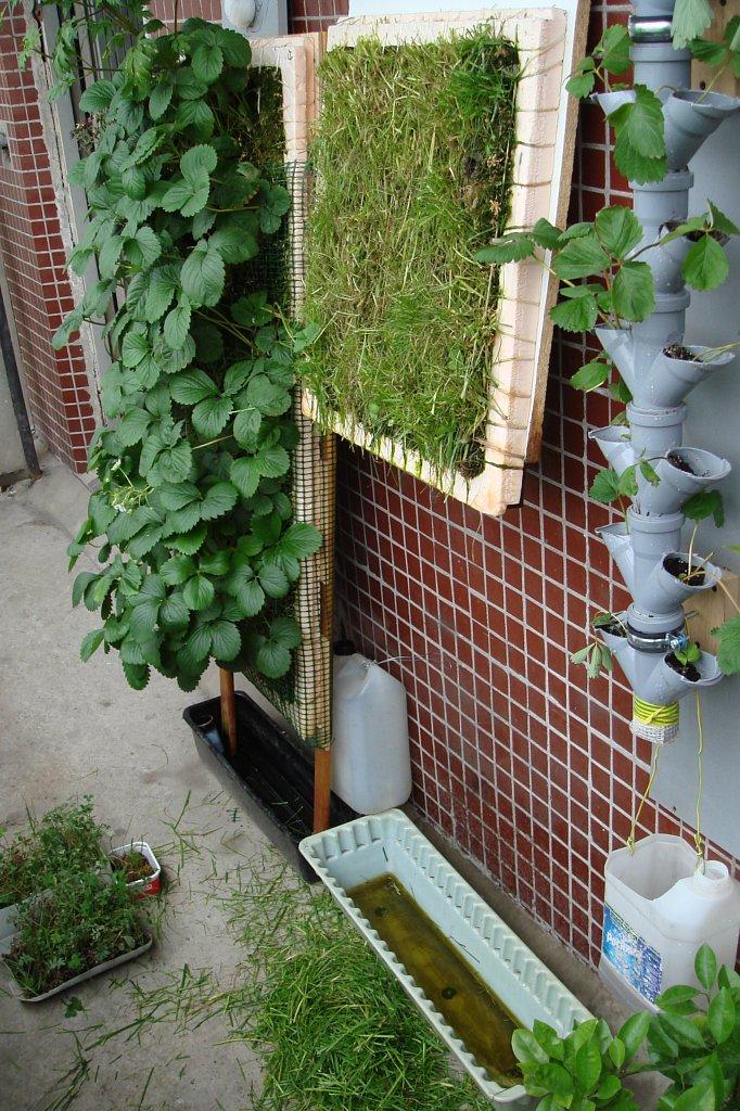 Мой вертикальный сад на балконе. - форум - вертикальное озел.