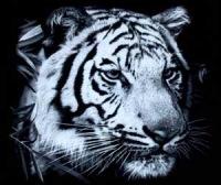 Wild Tiger-Fc, 24 января , Ставрополь, id161205263