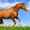 Галопом_из_Европы конный магазин