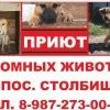 КАЗАНСКИЙ ПРИЮТ БЕЗДОМНЫХ ЖИВОТНЫХ в п. СТОЛБИЩЕ
