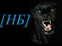 Котоматрица: Кому тут не нравятся черные кошки!