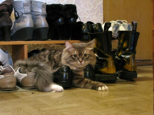 Мейсон среди обуви. 2010 год