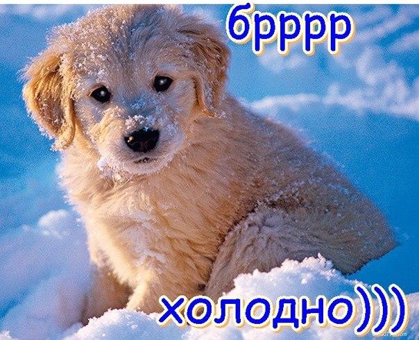 http://cs9988.userapi.com/u143687536/-5/x_3ca2ab17.jpg