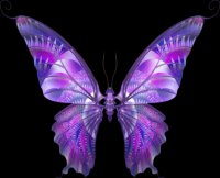 """Предпросмотр - Схема вышивки  """"шикарная бабочка """" - Схемы вышивки - arjowiggins - Авторы - Портал  """"Вышивка крестом """" ."""