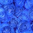 Фото розы.