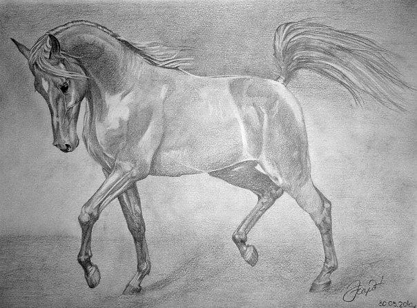 рисунки карандашом животные:
