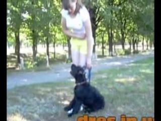 Команда  Рядом  Урок Видео по Дрессировки и обучении собаки