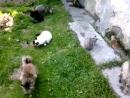 Лето, зелень и кошек немножко :-)