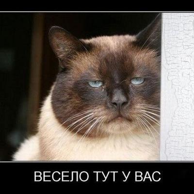 Берна Эгамбердиева, 8 мая 1992, Керчь, id225513086