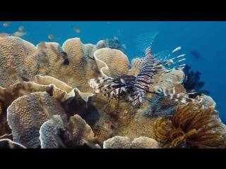 Подводный мир красота красок HD