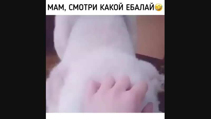 Vid_2019_45_10_18_45_37.mp4