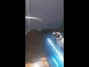 Dog in paddling pool bites at water from hose