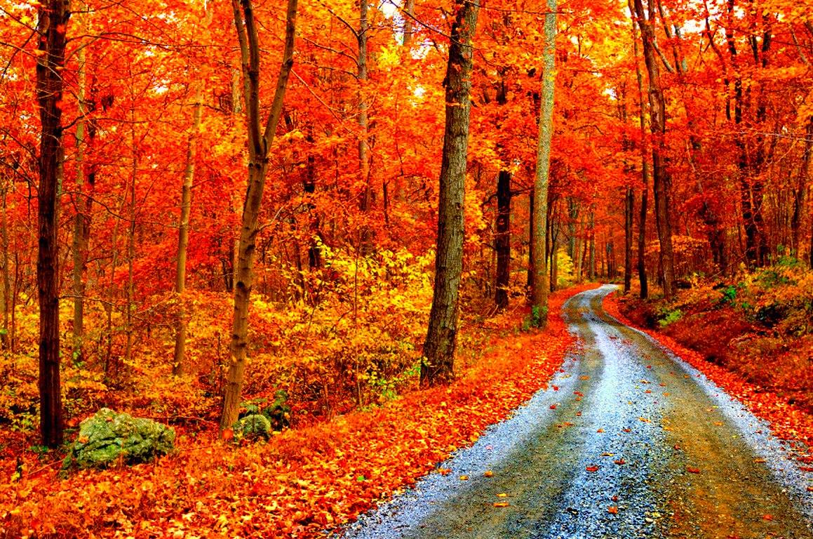 Autumn time ... - Pagina 2 _CG-nhsihvY