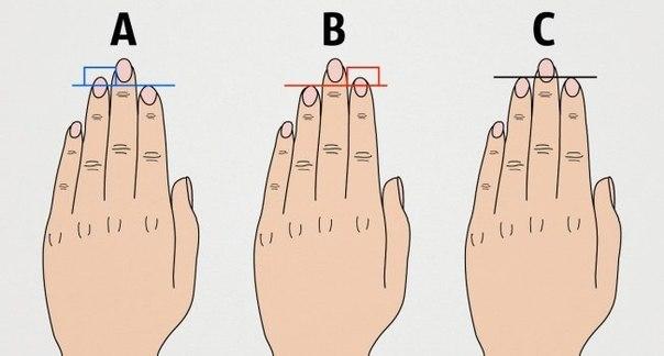 Вот что длина пальцев руки говорит о вашем характере: ↪ А у вас совпало?