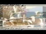 Летите - Лена Ильичева