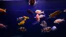 Tropical GEL FORMULA for Omnivorous Fish