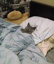 Нужно набраться смелости и всё-таки рассказать коту, что это он живёт у меня, а не я у него)