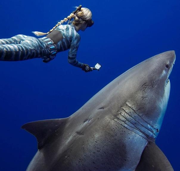 Завораживающие снимки гавайского фотографа Juan Oliphant Хуан Олифант создает захватывающие подводные снимки. Они выглядят настолько потрясающе, что их можно назвать шедеврами искусства.