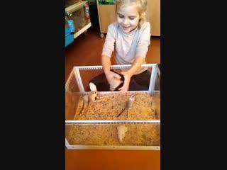 Это тоже видео из серии: дети и песчанки.