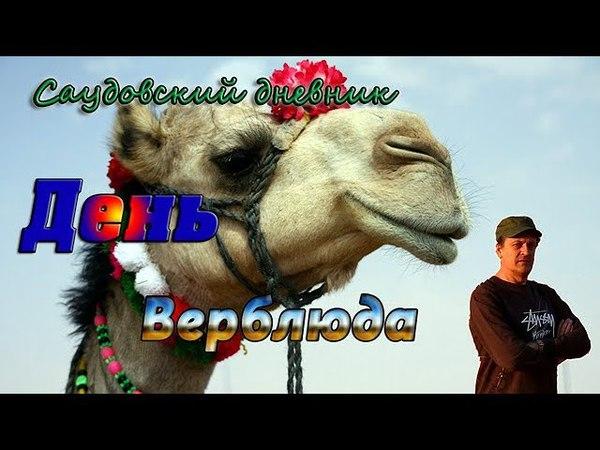 День Верблюда - Ежегодный верблюжий фестиваль им. Короля Абдулазиза