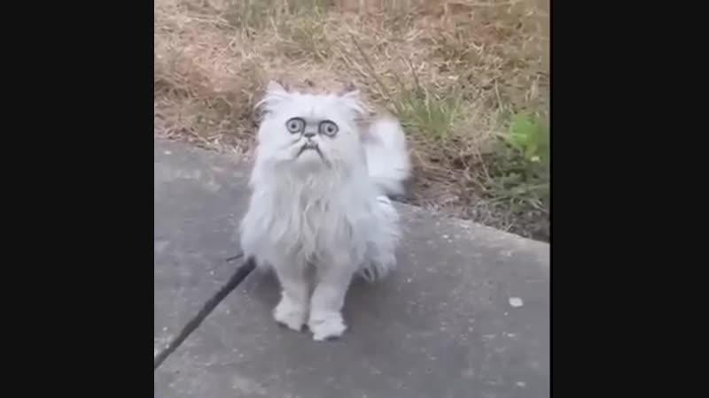 жуткий котейка