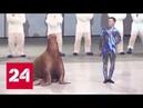 Премьера в Москвариуме : для зрителей готовят необычное новогоднее шоу - Россия 24
