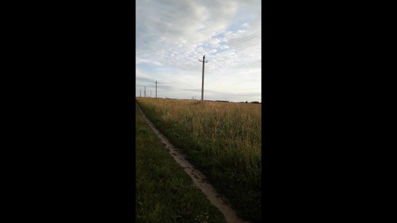 Дорога на пасеку.