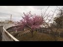 【4K】Windy day in Numazu, Shizuoka