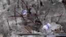 Розкидані шприци, голки та ампули у парку «Казка»