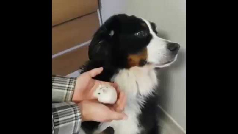 This Dog Doesn't Want A New Furry Friend