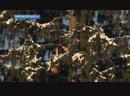 Главную новогоднюю ёлку России срубили в Щёлковском районе Московской области