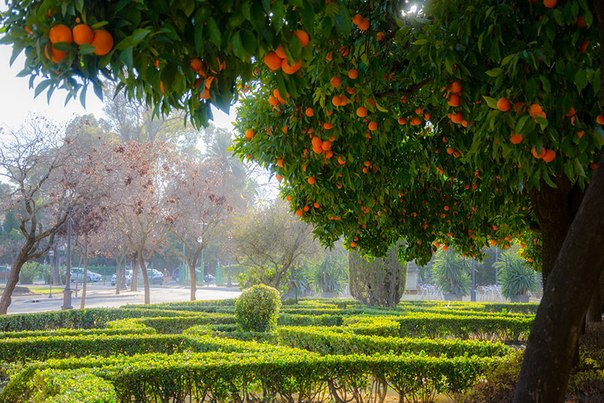 Почитать книгу под апельсиновым деревом в парке Андалусии – бесценно