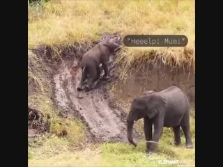 И слоны могут веселиться