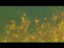 Подводный мир озера Балхаш mp4