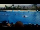 Шоу дельфинов 1 Бенидорм Испания