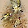 Птицы и ловля птиц