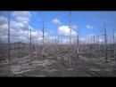 Камчатка, Северный прорыв, Мёртвый лес.