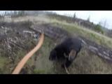 Бесстрашный охотник из Канады попытался отбиться от разъяренного медведя луком и стрелами