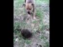 Кроль и йож))) йожик не пострадал! Собакен тоже! В парке на прогулке мой пёс впервые увидел ежа)