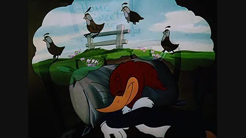 The Coo Coo Bird