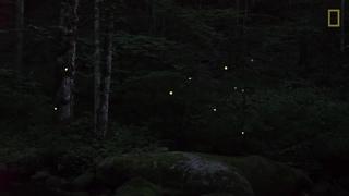 Firefly · #coub, #коуб
