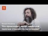 Кишечная палочка — Михаил Гельфанд
