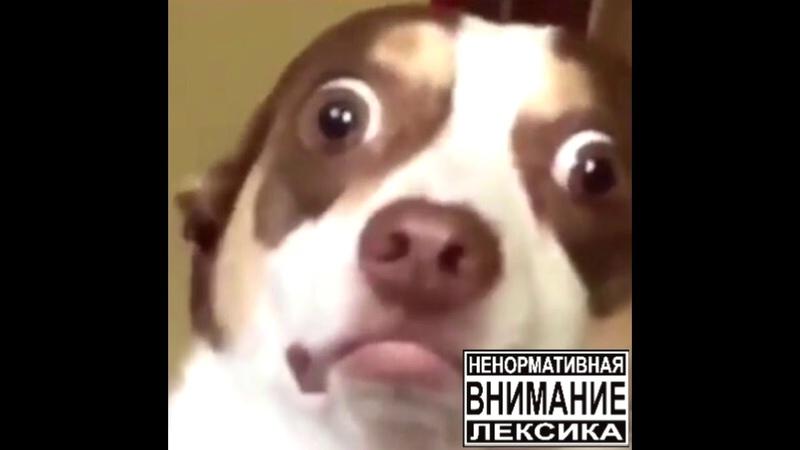ади сочный и курвид момма - БОРАТ