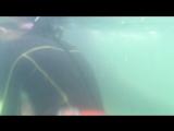 Плавание с дельфинами в Симода
