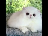 Глазастый котик